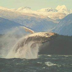 Pic from Alaska - Gulf of Alaska by nancy65