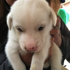 Musher camp excursion.....  PUPPIES!!