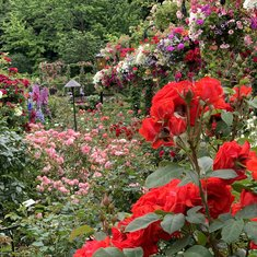 Buchart gardens in Victoria