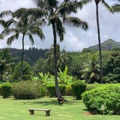 Kailua-Kona, Hawaii - Botanical Gardens
