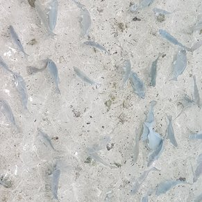 A lot of fishes