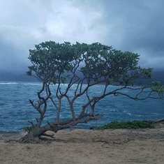 Cool tree pic in Maui
