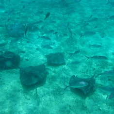 Excursion - Everybody Loves Rays and Sharks!